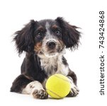 dog with ball isolated on a... | Shutterstock . vector #743424868