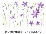 campanula patula lilac flowers  ... | Shutterstock . vector #743466640