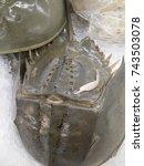 horseshoe crab | Shutterstock . vector #743503078
