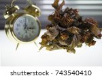 Small photo of Flowers and leaves are shriveled against the clock and a white background.