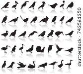 bird icon set | Shutterstock .eps vector #743561350