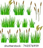 A Set Of Reeds  Grass And Canes ...
