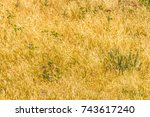 Dry Yellow Grass And Green...