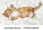 little cute kitten maine coon... | Shutterstock . vector #743623663