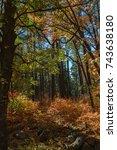 Colors Of Autumn In Sedona...