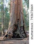 sequoia in national park in usa  | Shutterstock . vector #743673664