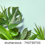 Various Tropical Leaves On A...