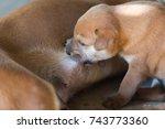 suckling puppy mother | Shutterstock . vector #743773360