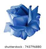 rose blue flower  on white... | Shutterstock . vector #743796880