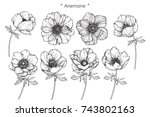 Anemone Flowers Drawing With...