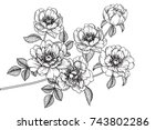flowers drawing with line art... | Shutterstock .eps vector #743802286