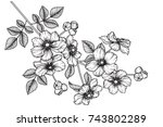 flowers drawing with line art... | Shutterstock .eps vector #743802289