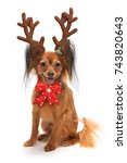 christmas year dog small puppy... | Shutterstock . vector #743820643
