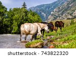 Stock photo horse herd at mountain river stream 743822320