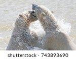 polar bear in the summer | Shutterstock . vector #743893690