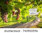grape harvest | Shutterstock . vector #743903596