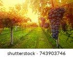 grape harvest | Shutterstock . vector #743903746