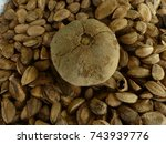 closed capsule with... | Shutterstock . vector #743939776