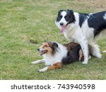 Two Sheepdogs In The Park On...