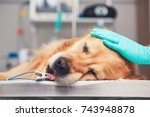 dog in the animal hospital.... | Shutterstock . vector #743948878