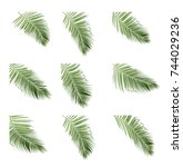 Set Coconut Frond Palm Leaf - Fine Art prints