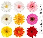 set of  colorful gerbera roses... | Shutterstock . vector #744036718