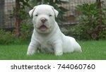 Stock photo puppy 744060760