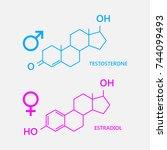 hormones  estradiol and... | Shutterstock .eps vector #744099493