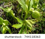 endemic plants and flowers in... | Shutterstock . vector #744118363