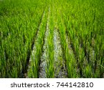 green nature landscape with... | Shutterstock . vector #744142810