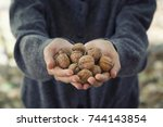 hands holding shelled walnuts | Shutterstock . vector #744143854