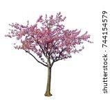 japanese sakura flower  full... | Shutterstock . vector #744154579