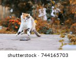 Stock photo  beautiful cat caught a mouse in the summer garden and fun and jumping and playing with her 744165703