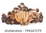 mushrooms close up. honey... | Shutterstock . vector #744167179