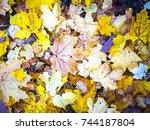 colorful autumn leaves autumn