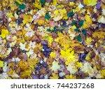 autumn. orange autumn tree.... | Shutterstock . vector #744237268