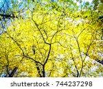 Yellow Autumn Trees. Tree...