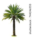indian wild date palm tree... | Shutterstock . vector #744246553