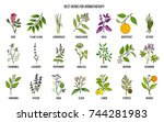 best herbs for aromatherapy.... | Shutterstock .eps vector #744281983