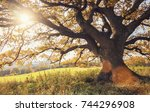 old oak tree at autumn | Shutterstock . vector #744296908