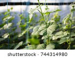 good natural food grows.green... | Shutterstock . vector #744314980