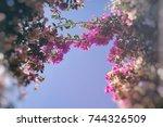 blossom sky bokeh | Shutterstock . vector #744326509