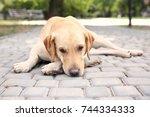 cute labrador retriever with... | Shutterstock . vector #744334333