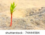 Young Seedling Growing In A...