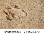 close up underwater photo of...   Shutterstock . vector #744528370