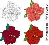 four flowers of hibiscus in... | Shutterstock .eps vector #744548050