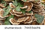 Close Up Of A Turkey Tail Fungus