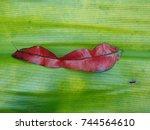 red leaf. | Shutterstock . vector #744564610