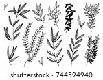 hand drawn botanical... | Shutterstock .eps vector #744594940