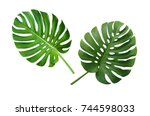 monstera deliciosa or swiss... | Shutterstock . vector #744598033